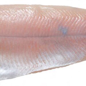 Regenbogenforelle Filet ohne Haut